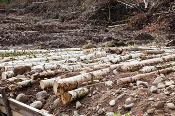 Many logs
