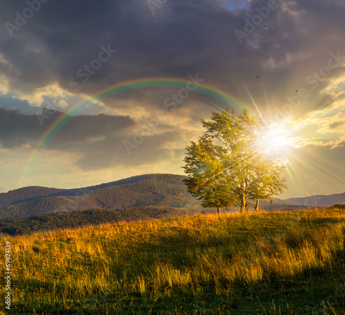 trees near valley in mountains  on hillside at sunset - 69624139