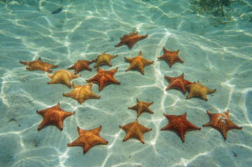Starfish on sand underwater