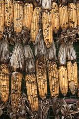 Corn has been damaged