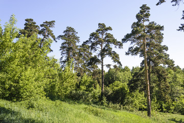 Щучинск, лес