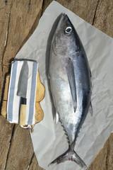 Albacore fresh fish