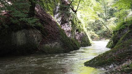 Treibholz im Wasser