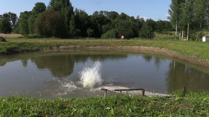 People jump from wooden bridge in pond lake water on summer day