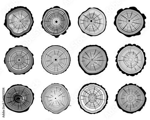 Set of cross section of the trunk, vector illustration - 69631304