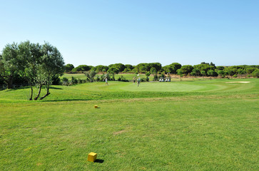Players in the golf course