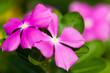 canvas print picture - garden flowers