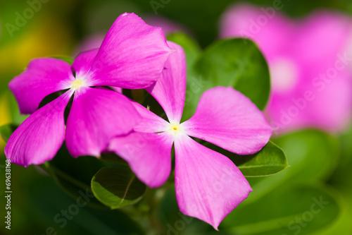 canvas print picture garden flowers
