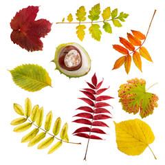 set von Herbstblättern und Kastanie