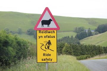 Verkehrsschild Schaf - Wales