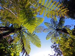 Ferns Against the Sky