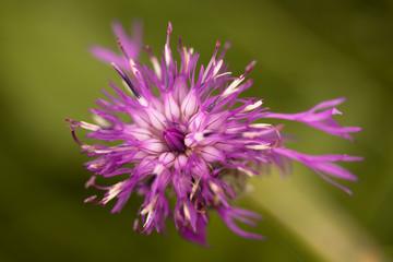 Kleine Blütenschönheit