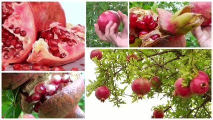 pomegranate montage