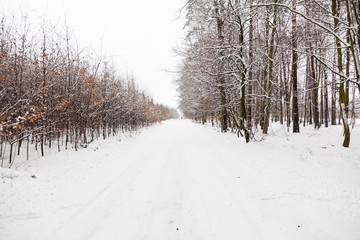 Snow alley road in winter forest.