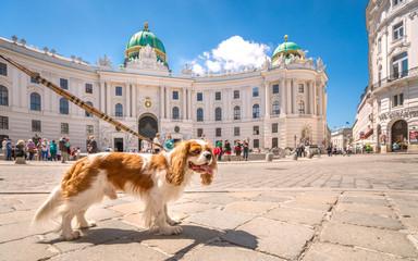 Städtereisen mit Hund