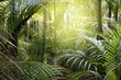 canvas print picture - Forest light