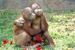 Monkey love - 69648521