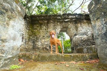dog standing in ruins