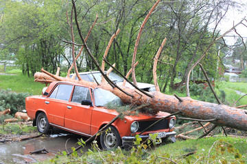 Упавшая сосна на автомобиль после урагана