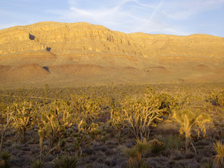 Arizona Desert Flora