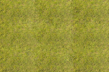 Green Grass. Textures and backgrounds
