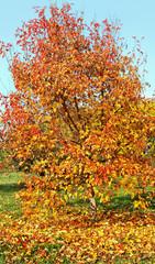 Tree in an autumn.