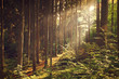 Beautiful dreamy forest