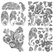 black line art ornate flower design collection, ukrainian ethnic