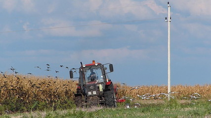 Tractor plowing a field and lots of gulls and starlings flying