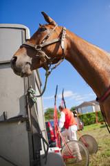 Le cheval et son jockey