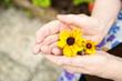 Hände voller Blumen