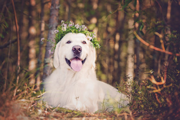 beautiful dog in the forest