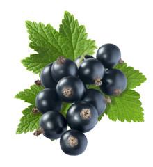 Black currant big with leaf isolated on white background