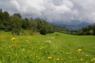Hochalpine Blumenwiese in Schladming