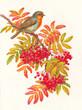 Постер, плакат: Зарянка на ветке осень акварель
