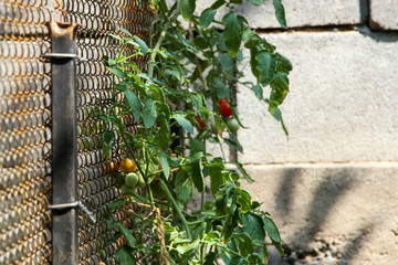 fence mesh netting
