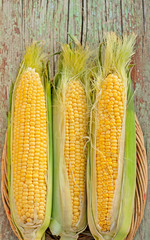corn on the cob in basket