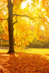 wood in seasonal forrest