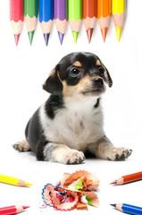 cucciolo affettuoso con matite colorate