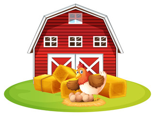 Chicken and barn