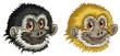 Gibbon faces