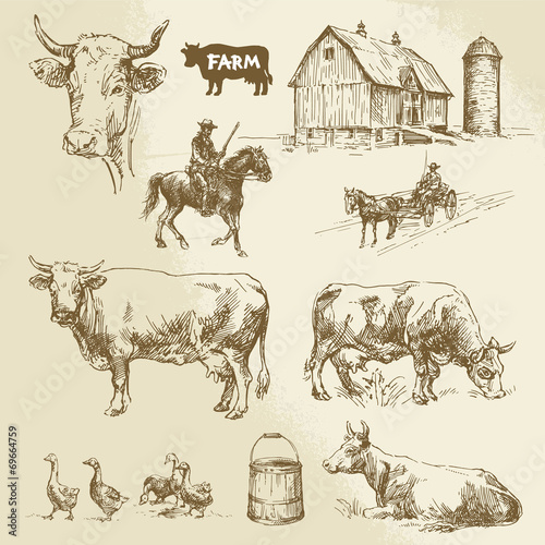farm, cow, agriculture - hand drawn collection - 69664759