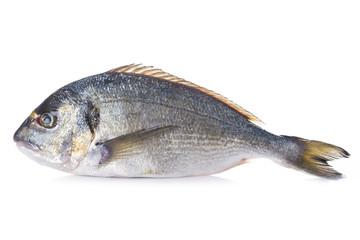 Pescado pez dorada fresca cruda aislada sobre un fondo blanco