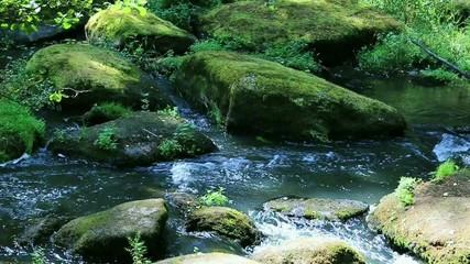 Fluss mit vermoosten Felsen im Wald
