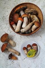harvest mushrooms