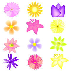 vector colorful flowers set on the white background