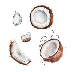 watercolor coconut set
