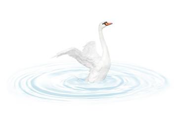 Bird swan
