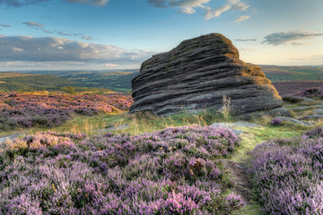 Sunset at Moorland, Heather in bloom over the rugged moor