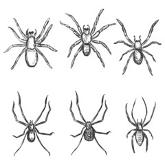 Vector Set of Sketch Spiders